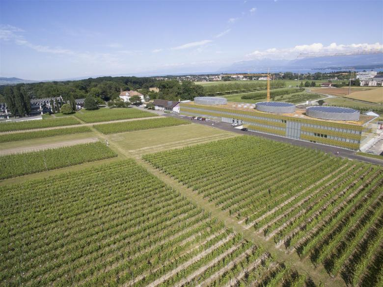 Agroscope vineyards on the Changins agronomic research site in Vaud