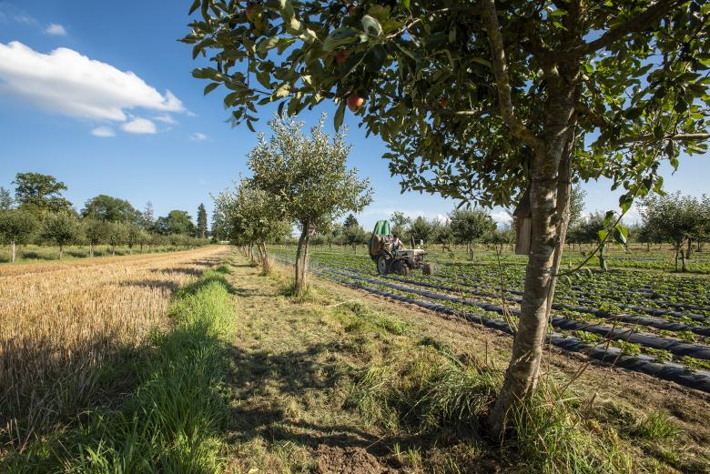 Converting 9% of agricultural land to agroforestry could offset 43% of greenhouse gas emissions caused by agriculture in Europe © Agroscope, Gabriela Brändle
