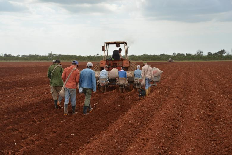 Agroscope and the Cuban National Center for Animal and Plant Health (CENSA) are analysing the effects on soil quality of various pesticides used in potato cultivation © Agroscope, Thomas Bucheli