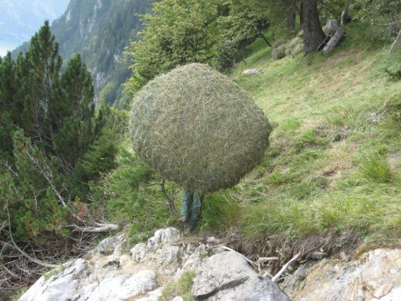 Fauchage du foin sauvage © Luzern Tourismus