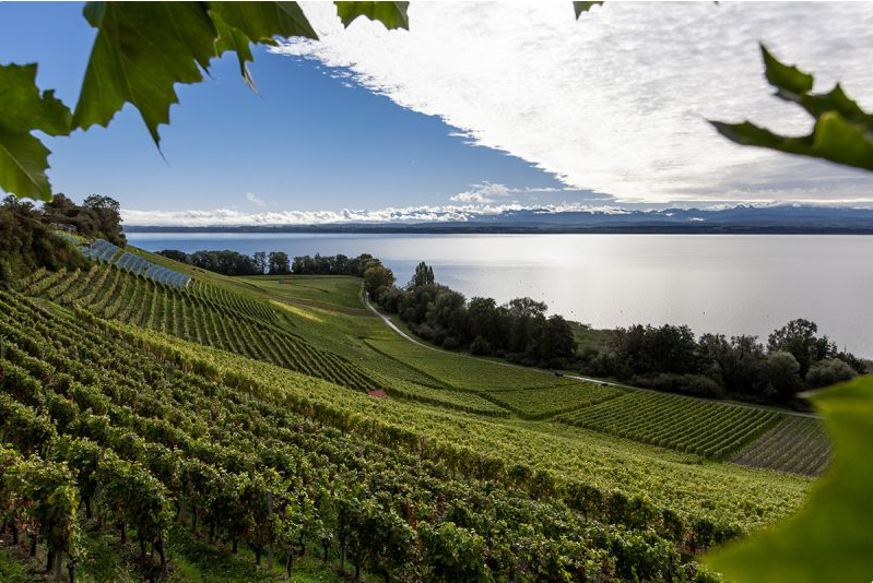 vineyard neuchatel