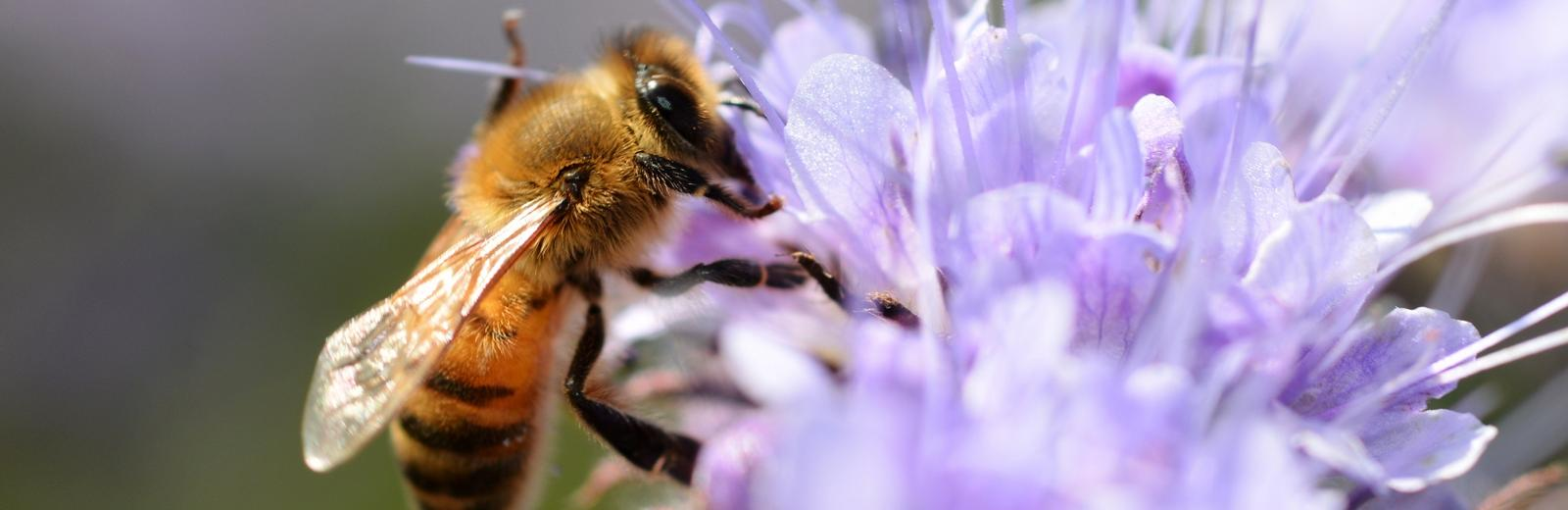 Swiss research for sick bees | Swiss Environment