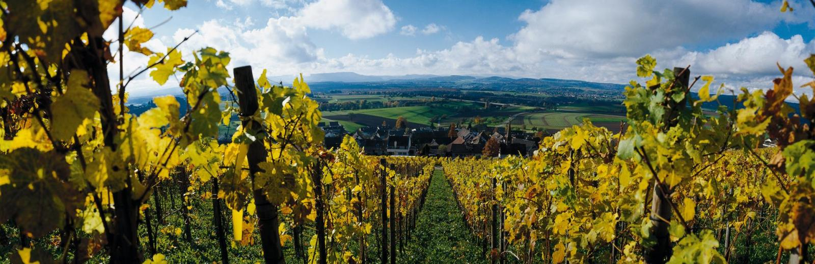 Vineyards © Switzerland Tourism