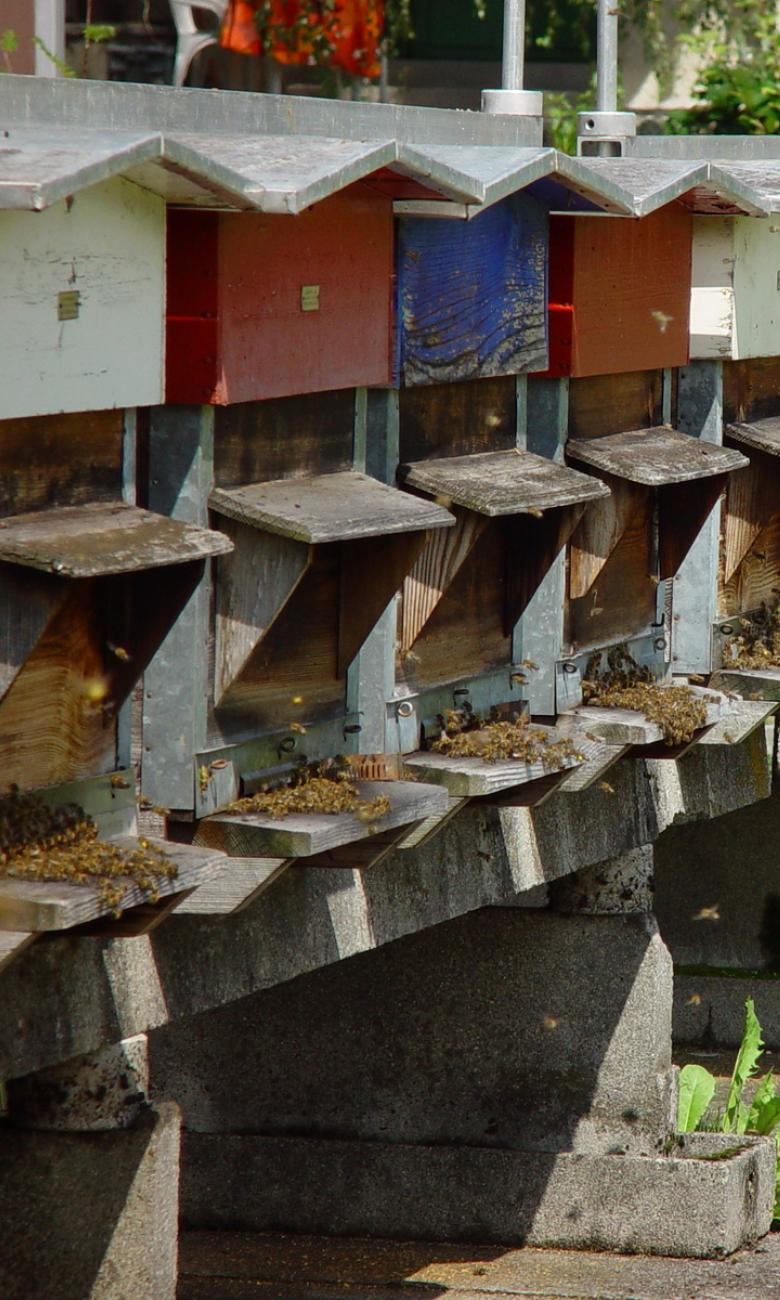 Beehives belonging to the Swiss Bee Research Centre Ⓒ Agroscope