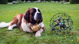 st bernard dog and drone